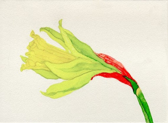 Single Daffodil, original watercolor