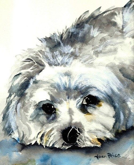 maltese painting maltese watercolor painting 4891