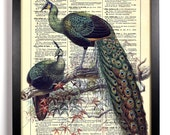Peacock Lovers, Home, Kitchen, Nursery, Bathroom, Office Decor, Wedding Gift, Eco Friendly Book Art, Vintage Dictionary Print, 8 x 10 in.