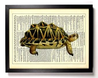 Tortoise, Home, Kitchen, Nursery, Bathroom, Office Decor, Wedding Gift, Eco Friendly Book Art, Vintage Dictionary Print, 8 x 10 in.