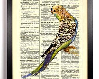 Cute Parakeet Bird, Home, Kitchen, Nursery, Bath, Office Decor, Wedding Gift, Eco Friendly Book Art, Vintage Dictionary Print 8 x 10 in.