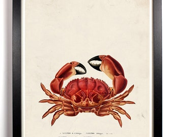 The Red Crab, Home, Kitchen, Nursery, Bath, Dorm, Office Decor, Wedding Gift, Housewarming Gift, Unique Holiday Gift, Wall Poster