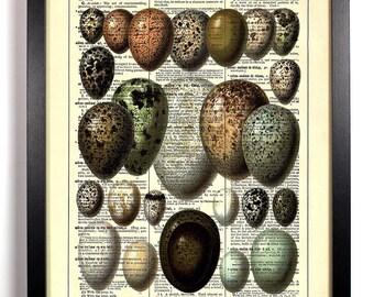 Bird Egg Collection, Home, Kitchen, Nursery, Bath, Office Decor, Wedding Gift, Eco Friendly Book Art, Vintage Dictionary Print 8 x 10 in.