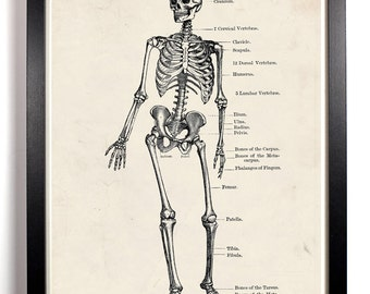 The Human Skeleton Anatomy, Home, Kitchen, Nursery, Bath, Dorm, Office Decor, Wedding Gift, Housewarming Gift, Holiday Gift, Wall Poster
