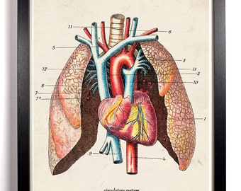 The Anatomy Lung Diagram, Home, Kitchen, Nursery, Bath, Office Decor, Wedding Gift, Housewarming Gift, Unique Holiday Gift, Wall Poster