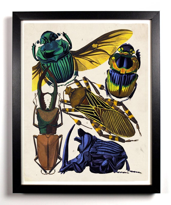 The Insect Collection 1, Home, Kitchen, Nursery, Bath, Dorm, Office Decor, Wedding Gift, Housewarming Gift, Unique Holiday Gift, Wall Poster