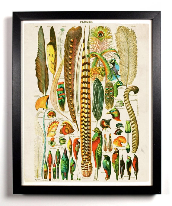 Various Bird Feathers Chart, Home, Kitchen, Nursery, Dorm, Office Decor, Wedding Gift, Housewarming Gift, Unique Holiday Gift, Wall Poster