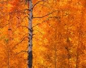 FireLight  by internationally acclaimed photographer BENJAMIN WALLS