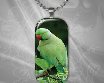 Alexandrine Parakeet Glass Tile Pendant with chain(CuAnR2.4)