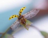 Fine Art Macro Photography Print ladybug  flying away