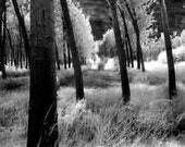 Fine Art Photography Print black and white Infrared forest