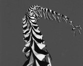 Fine Art Photography Print Black and White kite hungry for heaven