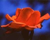 Fine Art Photography Print rosebud For all women in the world