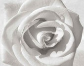 White Rose photography, Macro photo, Black and White, Wall decor, Wall Art, Home Decor, fine art photography, flower photography
