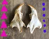 The lovely Bones- Itty bitty critter jaw bones