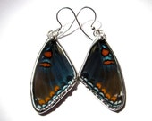 Real Red Spotted Purple Butterfly Wing Earrings