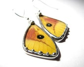 Butterfly Jewelry Real Recycled Butterfly Moth Wing Earrings