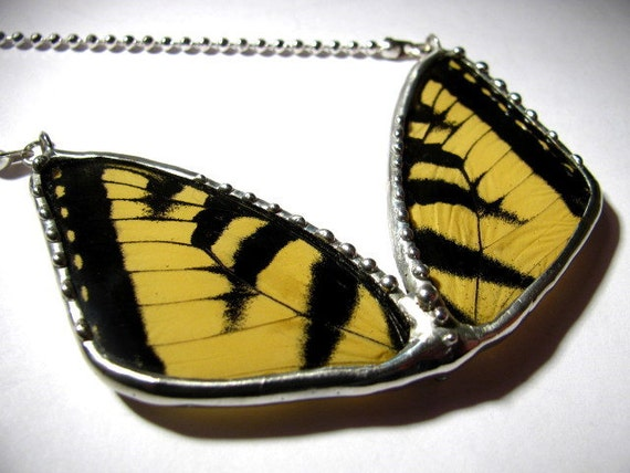Real Tiger Swallowtail Butterfly Wing Necklace