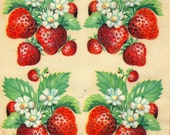 "Vintage Eagle Transfer ""Famous Artists Series"" - Strawberries No. 232"