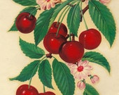 "Vintage Eagle Transfer ""Famous Artists Series"" - Cherries No. 210"
