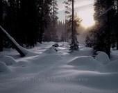 Summit Meadow, Yosemite,  Ultrachrome K3 Archival Print