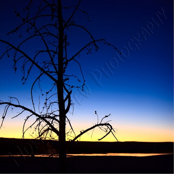 Clepsydra Sunset Matted Photograph Of A Lone Pine