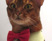 point collar in choice of color or print and interchangeable bow tie for cat