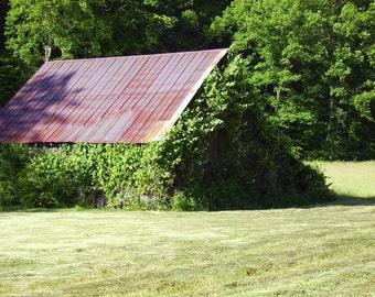 Sweetwater Kudzu Photograph, 5 x 7 barn photo