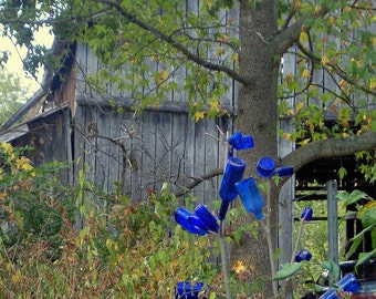 Blue Bottle Tree, at Shelagh's House, Frankfort, Kentucky--8 x 10 fine art photo, signed
