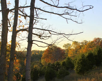 October Meadow, Franklin County, Kentucky--8 x 10 fine art photo, signed