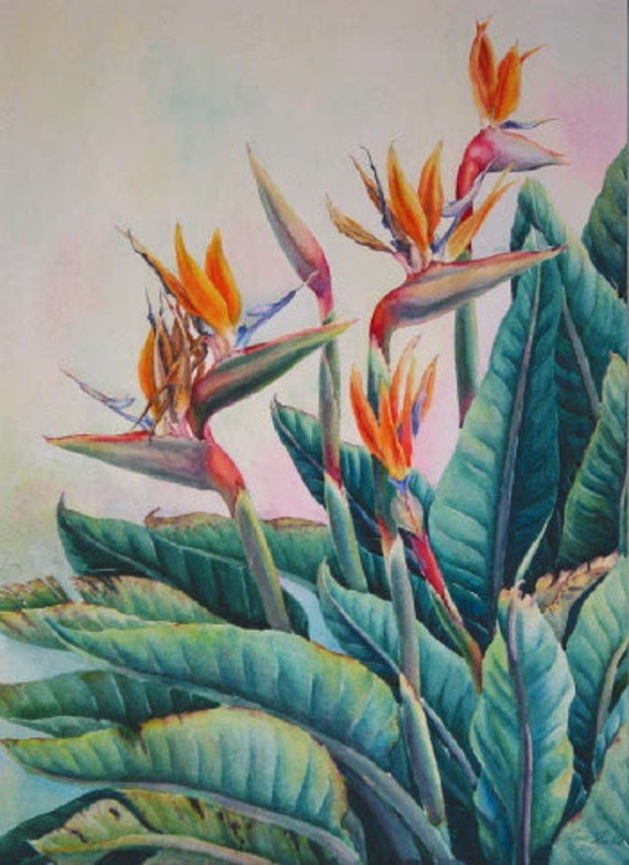 Botanical Plein Air Watercolor Painting, Bird of Paradise by Elena Roché