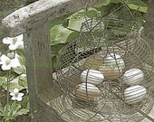 Vintage, Wire Egg Basket, Photography Print, 5x7 + More Sizes, Garden, Wooden Seat Bench, Flowers, Chicken Eggs, Country, Farmhouse Decor