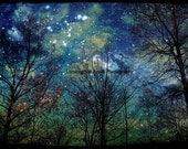 Mystical Forest, Nature Photography, Fine Art Prints, Metallic Finish, Blue Sky, Stars, Trees, Starry Night Wall Art, Celestial Home Decor