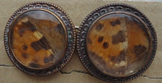 Fabulous real butterfly wings under glass - vintage buckle
