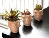 BACKORDER- Mini Ceramic Skull Planter (without plant)