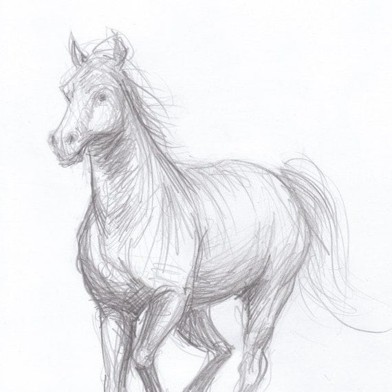 Galloping horse sketches - photo#22