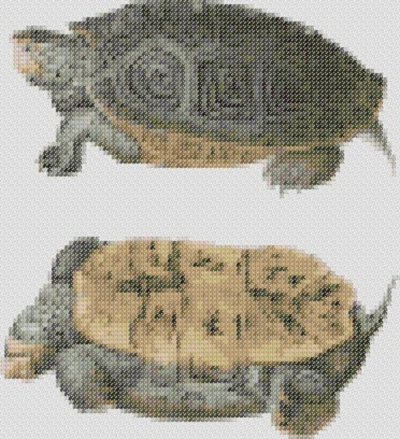 Free Turtle Cross Stitch Pattern | Flickr - Photo Sharing!
