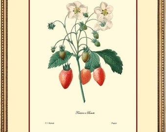 Botanical 9x12 print reproduction 1016 - Redoute Strawberry