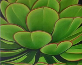 """Succulent original oil 24""""x24""""by Carin Vaughn"""