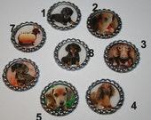 Eight Dachshund Dog Bottle Caps