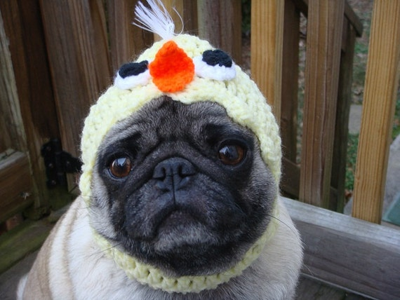 Baby Chick Dog Hat / Made to Order