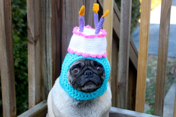 Happy Happy  Birthday Cake Dog Hat / Made To Order