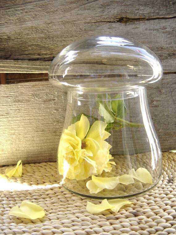 Vintage Mushroom Apothecary Jar - Terrarium