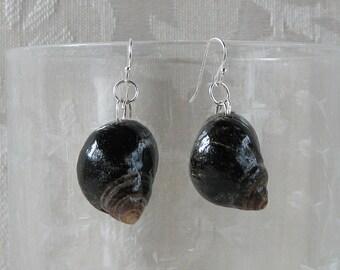 Periwinkle Shell Earrings