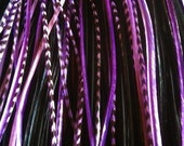 Feather Extensions - Black Purple Grizzly -  Long feather hair extensions 4 bonded hair feathers with threader