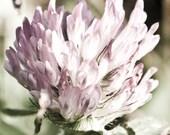 Pink Flower Shabby Chic Fine Art Photograph 8x10 Home Decor Feminine Whimsical Gift for Her Nursery Decor