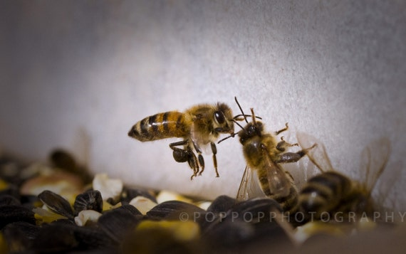 items similar to honey bee fine art photograph 8x10 home