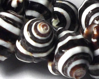 Shell Beads - Black and White Striped Pyrene Shell strand