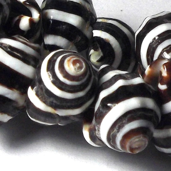 Shell Beads - Black and White Striped Pyrene Shell 8 inches