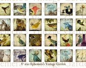 Printable Vintage Bird Inchies  - Digital Collage MINI SHEET - jewelry pendant 1x1 inch squares